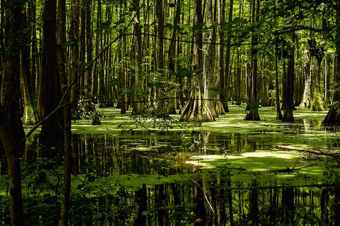 Chicot-State-Park-en-Louisiane